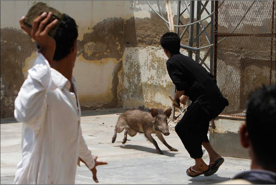 Dogs For Sale In Karachi