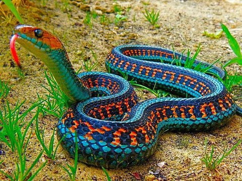 Overcoming The Road Blockades And Braving The Protests, Hundreds Of People  Came To The Karachi Zoo On Feb 20, 2013 To See 31 Large Snakes, Which Have  Been ...