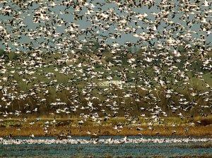 oiseaux_050