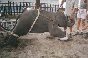 Show Elepha