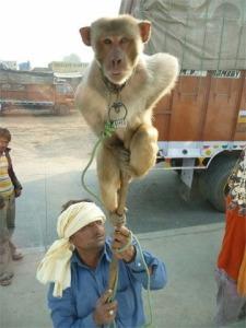 Show Monkey