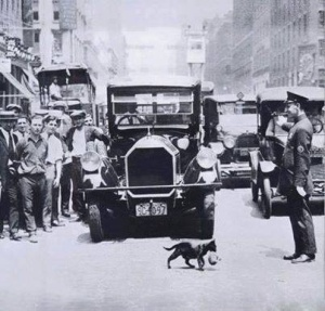 Traffic suspended to let a cat carrying a kitten cross the street. New York, July 1925.