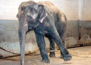 Zoo Islamabad