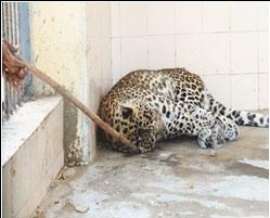 Zoo Landhi