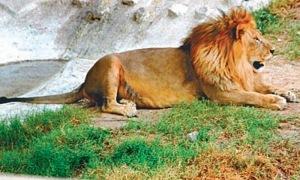 Jumbo Lahore Zoo