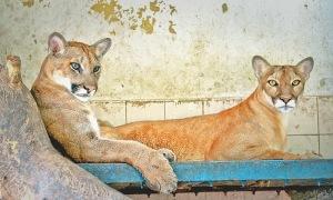 Puma Karachi Zoo
