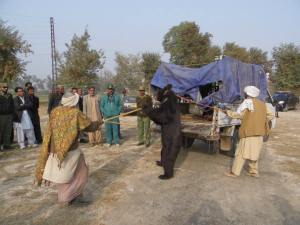 One of the rescued bears at Ghotki in January 2015.