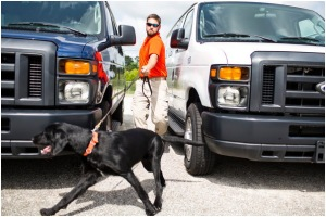 Bart Rogers, a canine instructor with the Canine Performance Sciences Program at Auburn University, working with Notty, a 10-month-old puppy searching for a hidden target.