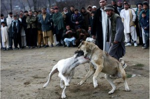 Cruelty Dog Fight