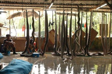 Unchecked and Illegal Wildlife Trade Networks – ANIMAL