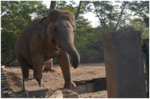 Figure 4: Unsafe enclosure border / possible escape point for Kaavan